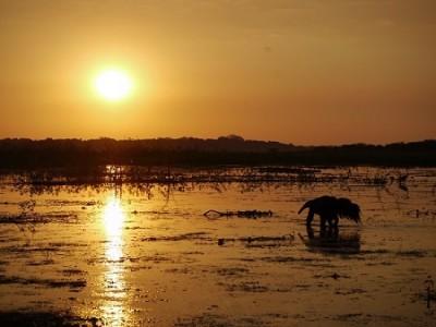 giant-anteater-bolivia-beni-savanna-barba-azul-nature-reserve-armonia