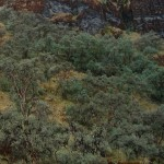 polylepis-forest-bolivia-armonia