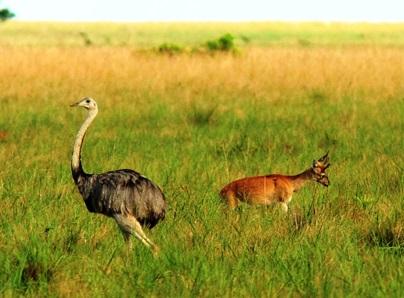 barba-azul-nature-reserve-bolivia