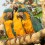Top 8 successes for endangered macaw habitat