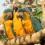 Top 8 successes for endangered macaw habitat