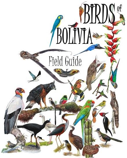 birds-of-bolivia-field-guide-tshirt-design-armonia