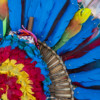 Six thousand macaws saved by Armonía's alternative feather program