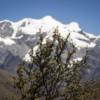 Comunidades locales impulsan la restauración de los bosques más amenazados de Bolivia