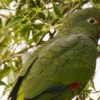 First eBird checklist registered for Tucuman Parrot Nature Reserve