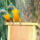 The Most Important Nesting Area of the World's Rarest Macaw becomes  New Nature Reserve