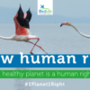 Conservation world calls on UN to make a 'healthy natural environment' a human right