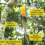 Why Population Estimate Studies are Important: Summary of the Blue-throated Macaw Study