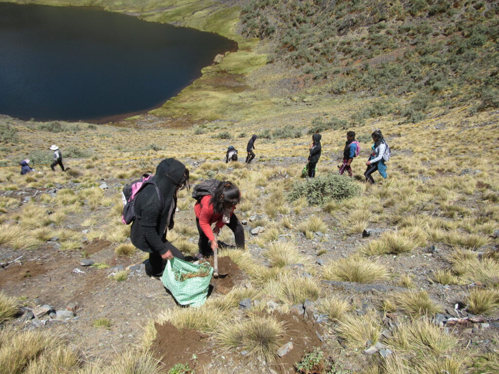 This image has an empty alt attribute; its file name is reforestacion-en-el-bosque-de-Queñua-Pata.-de-esquejes-de-Polylepis-pepei.-Alumnos-de-la-esculea-de-Puina.Bosque-de-Queñua-Pata.20-Nov-19-1024x768.jpg