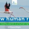 El mundo de la conservación pide a la ONU que incluya un «medio ambiente sano» como un derecho humano